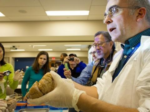 Prof. L.E. White shows human brains on a public tour of the Duke University School of Medicine.