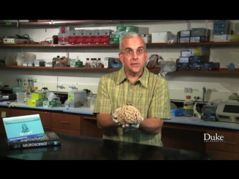 Coursera, Medical Neuroscience, Photo from the making of the Medical Neuroscience promo video.
