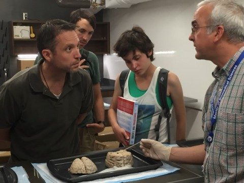 Interested guests of the Duke Institute for Brain Sciences explore human brains