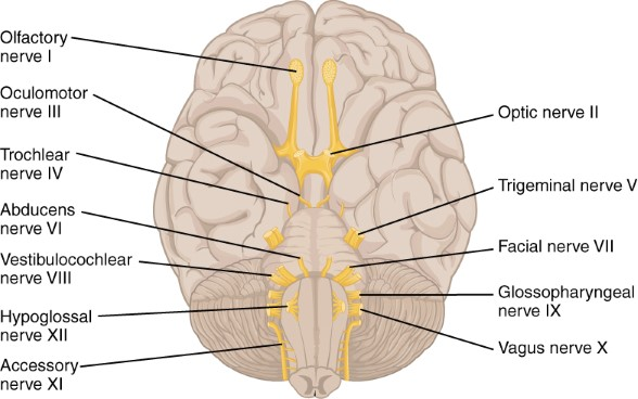 Study Tips Neuroanatomy - Learn Medical Neuroscience